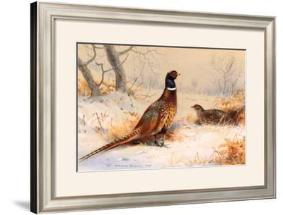 Cock and Hen Pheasant by Archibald Thorburn