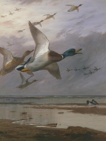 Duck Rising
