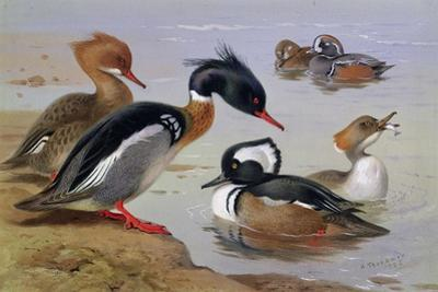 Ducks by a Lake by Archibald Thorburn