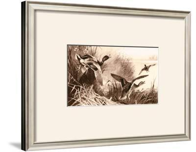 Ducks by Archibald Thorburn