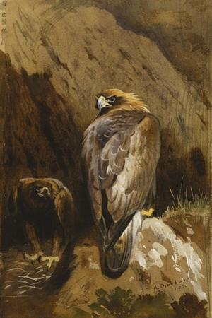 Golden Eagles at their Eyrie, 1900 by Archibald Thorburn