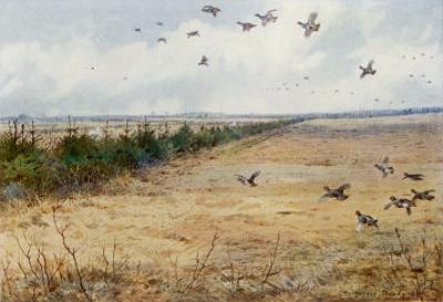 Partridges at Sandringham by Archibald Thorburn