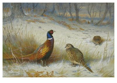 Pheasant in Winter by Archibald Thorburn