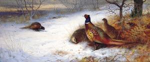 Pheasants and Hens in Snow by Archibald Thorburn