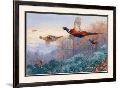 Pheasants in Flight by Archibald Thorburn