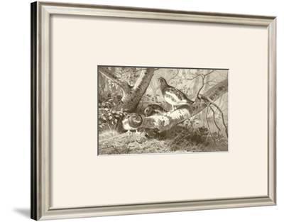 Ryper by Archibald Thorburn