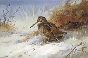 Winter Woodcocks by Archibald Thorburn