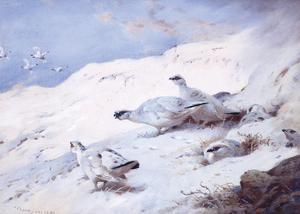 Woodcock in a Snowy Highland by Archibald Thorburn
