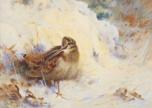 Woodcock in the Snow by Archibald Thorburn