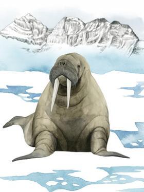 Arctic Animal III