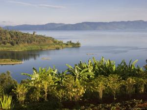 Crops Cultivated on Shores of Lake, Lake Kivu, Gisenyi, Rwanda by Ariadne Van Zandbergen