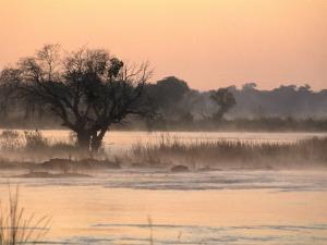 Early Morning Mist Rises off the Zambezi River, Zambezi National Park, Matabeleland North, Zimbabwe by Ariadne Van Zandbergen