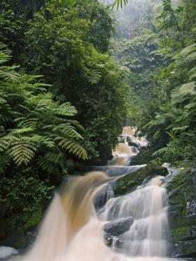 River Running through Montane Rainforest, Nyungwe Forest National Park, Gisenyi, Rwanda by Ariadne Van Zandbergen