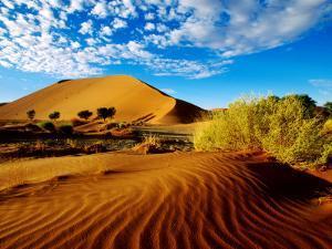 Sand Dunes in Namib Desert Park by Ariadne Van Zandbergen
