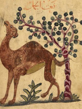 A Camel Passing a Tree