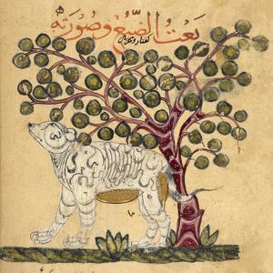 A Hyena by Aristotle ibn Bakhtishu