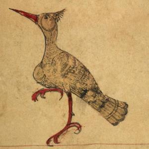 Hoopoe by Aristotle ibn Bakhtishu