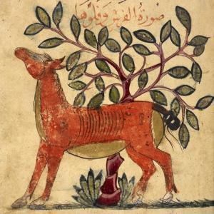 Horse by Aristotle ibn Bakhtishu