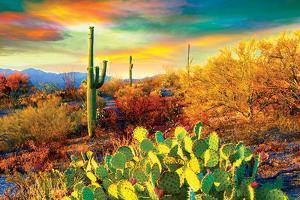 Arizona Desert Colors