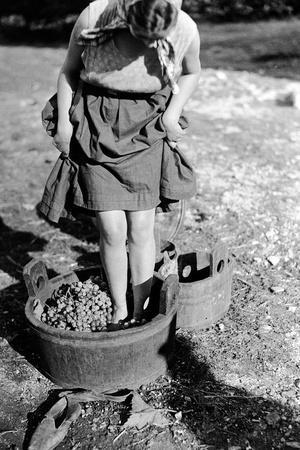 Wine Treading in a Vat, Italy