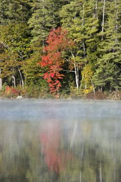 Indian Summer in the Us Federal State of New Hampshire by Armin Mathis