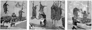 Armour Company's Pig Slaughterhouse, Chicago, Illinois, USA, 1892