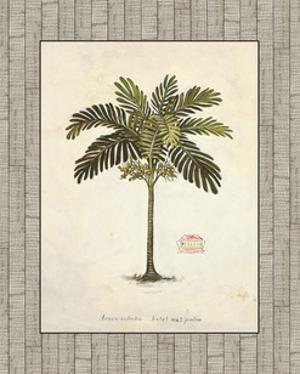 Nut Palm Illustration by Arnie Fisk
