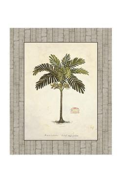 Nut Palm Illustration by Arnie Fisk