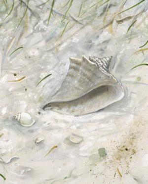 Seaside Conch by Arnie Fisk