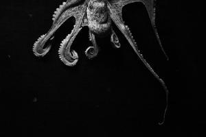 Octopus by arnon toussia-cohen