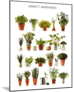 Aromatic Garden
