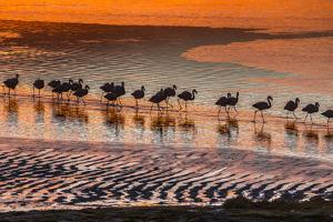 Altiplano, Bolivia, Eduardo Abaroa Andean Fauna National Reserve, Laguna Colorada, flamingos by Art Wolfe