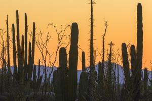 Catavina Desert, Baja California, Mexico by Art Wolfe