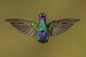 Ecuador Hummingbird by Art Wolfe