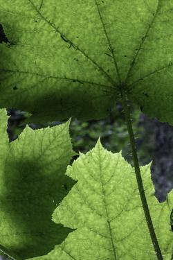 Ferns by Art Wolfe