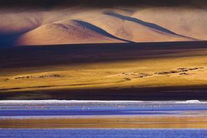 Flamingos, Altiplano, Bolivia by Art Wolfe