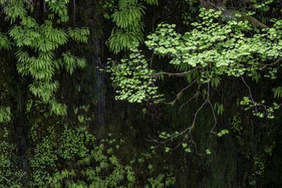 Hood River by Art Wolfe