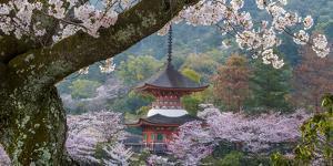 Japan by Art Wolfe
