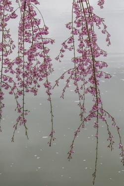 Kyoto Japan 3 by Art Wolfe