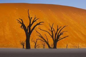 Namib-Naukluft National Park, Namibia by Art Wolfe