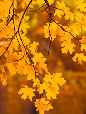 Orange Leaves by Art Wolfe