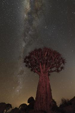 Quiver Tree, Namibia 2 by Art Wolfe