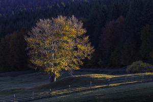 Romania Landscape II by Art Wolfe