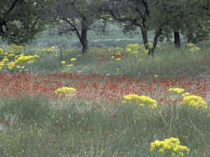 Rural Landscape and Wildflowers, Cappadocia, Turkey by Art Wolfe