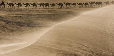 Salt caravan, Sahara Desert, Mali by Art Wolfe