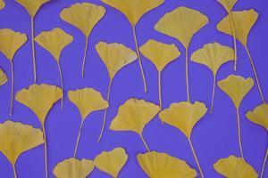 Seattle Ginko by Art Wolfe
