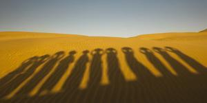 Shadows of waterbearers, Thar Desert, India by Art Wolfe