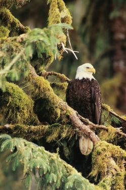 Silent Sentinel Alaska by Art Wolfe