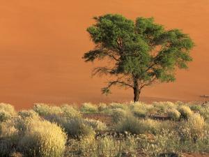 Sossusvlei Dunes, Namib National Park, Namibia by Art Wolfe
