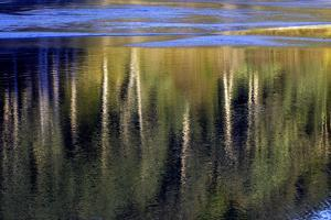 Washington_Quinault reflections by Art Wolfe